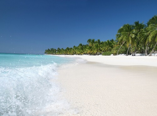 Sand Beach, Caribbean Ocean and Palm Trees