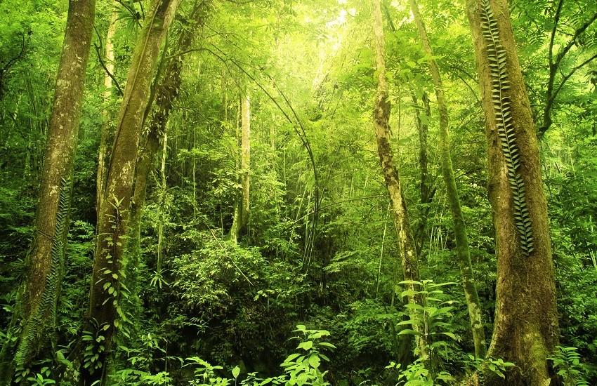 Borneo Rainforrest