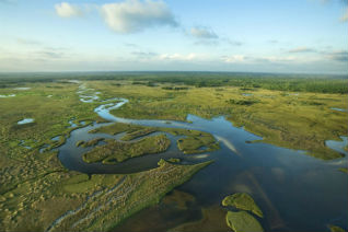The Everglades are home to some of Florida's most stunning wildlife. Image credit: Thinkstock.