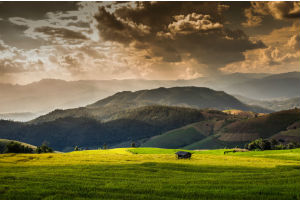 Vietnamese mountains and rice fields, image by Thinkstock/iStock