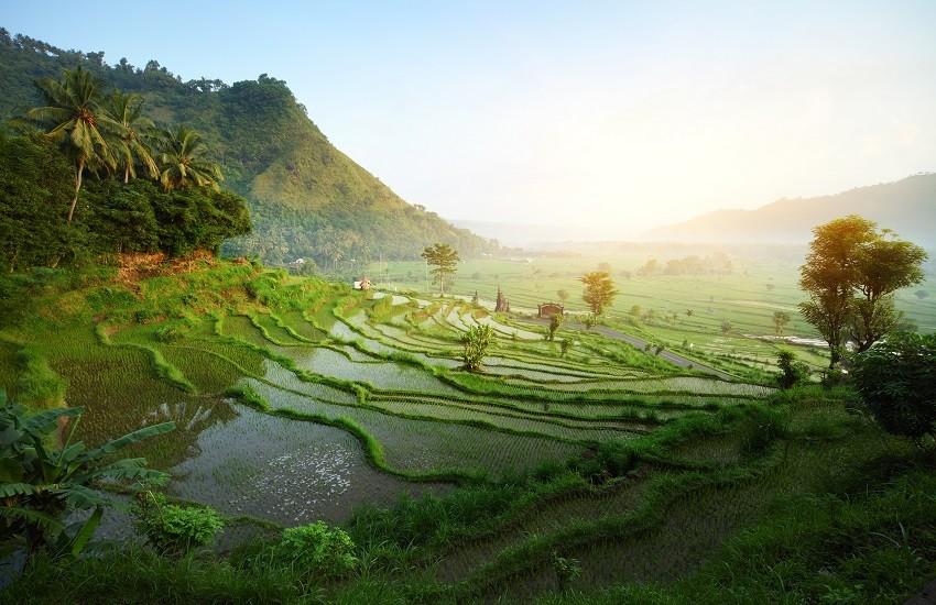 Bali Rice Fields