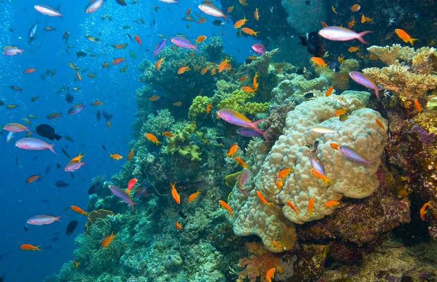 Cairns Barier Reef