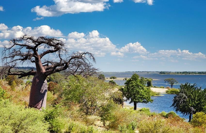 Chobe River Landscape