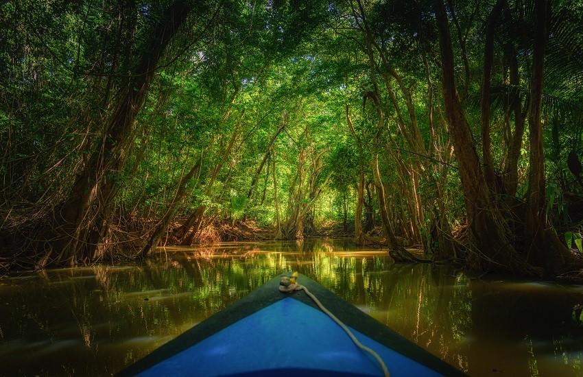 Dominica Mangrove