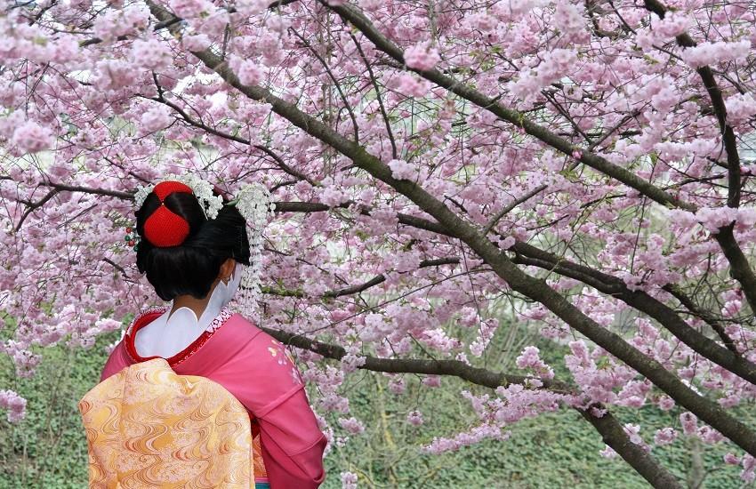 Japan Geisha Pink Blossom