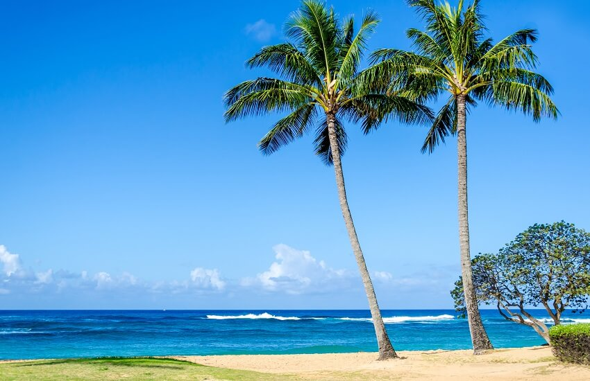 Cococnut Palm trees on Poipu beach