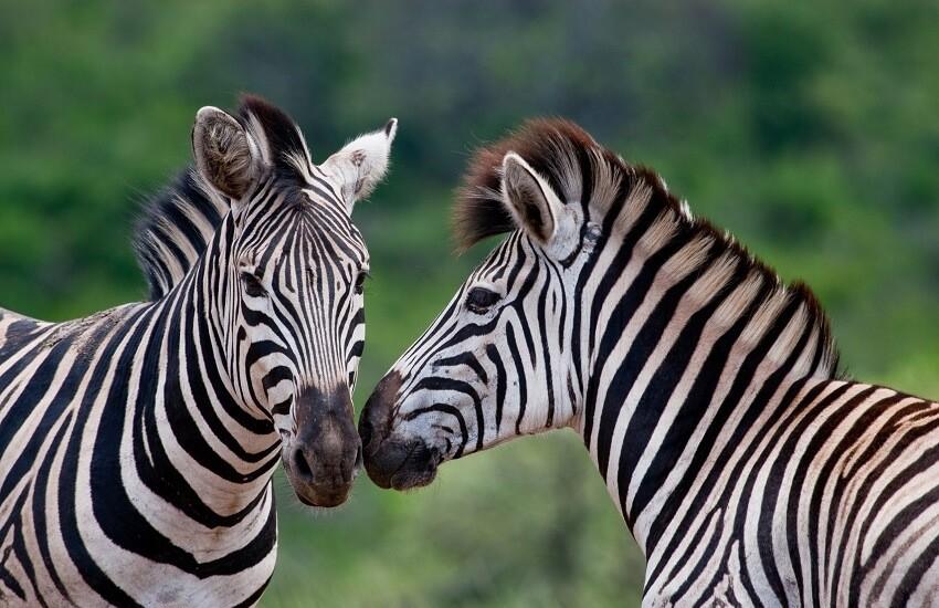 KwaZulu Natal Game Reserve