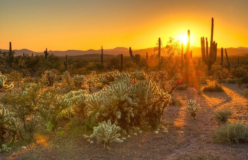Phoenix Sonoran Desert
