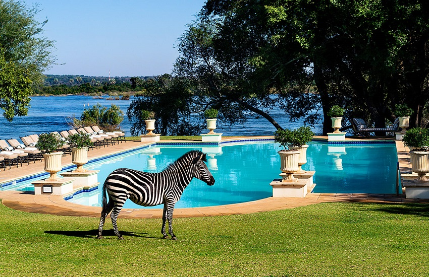 Pool With Zebra