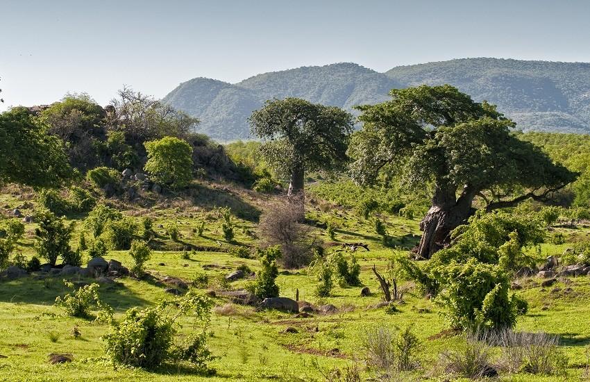Ruaha Landscape