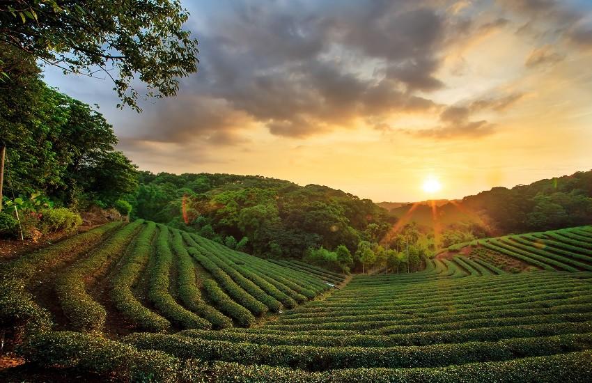 Sri Lanka Teafields