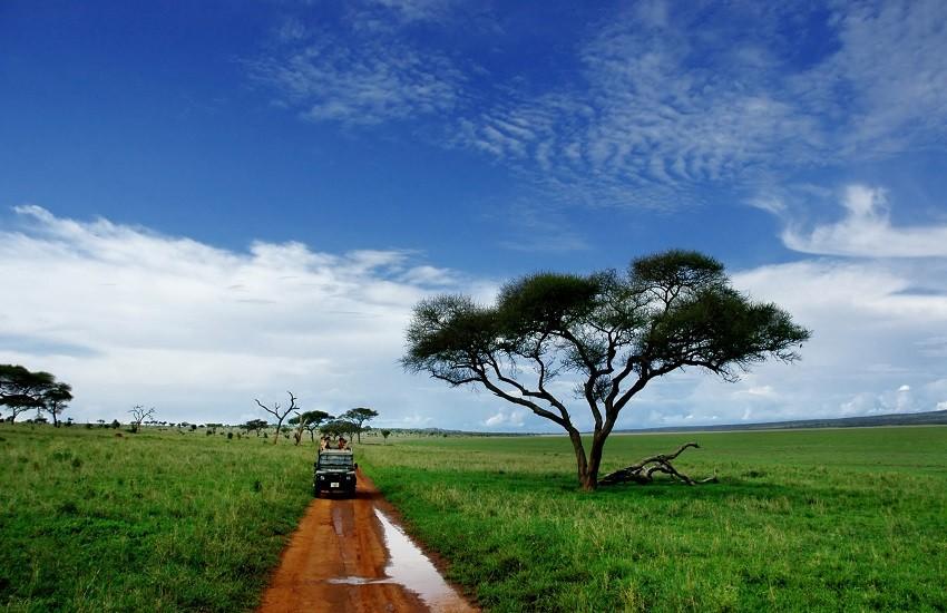Tarangire Safari Drive