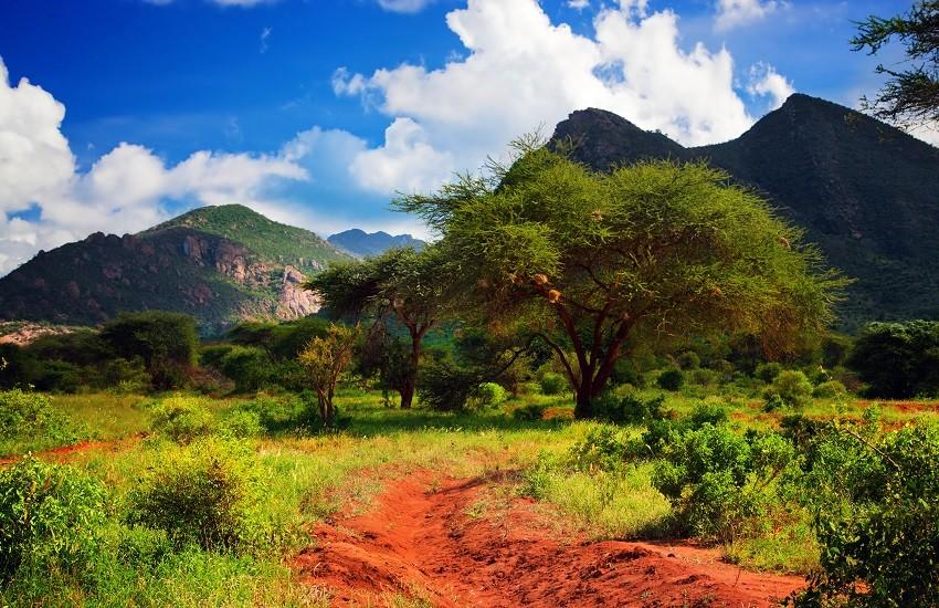 Tsavo Landscape