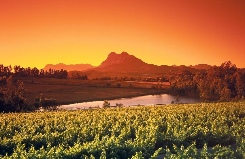 Winelands Landscape