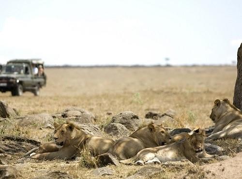 Masai Mara 4x4